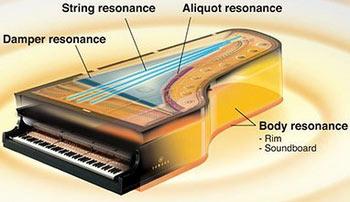piano organic elements